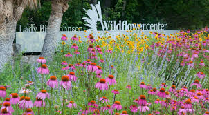 austin native plants lady bird johnson wildflower center designated texas state botanic