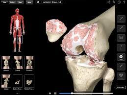 3d Knee Anatomy Knee Pro U2013 3d4medical