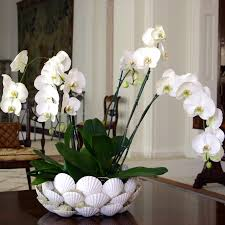 Orchid Delivery Decorate Your Home In Style This January Flowers Blog Flowers