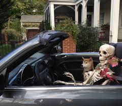 Pet Ready Exterior Doors by Return Of The Skeleton Crew Wildtrumpetvine