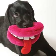 squeaky toys in stock now petplanet co uk