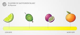How Is Champagne Made About Sauvignon Blanc Wine Taste Regions And Food Pairing