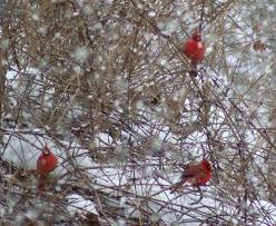 your backyard wildlife habitat helping avian friends in snowy