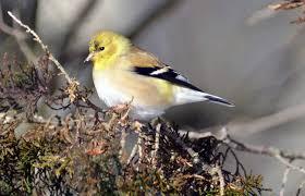 photo study of birds at e b