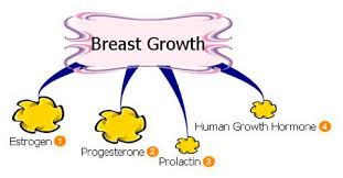 9 foods to increase breast size naturally breast enlargement