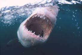 shark week 2017 one thing you don u0027t know