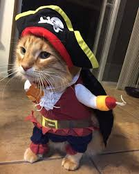 amazon com topsung cool caribbean pirate pet halloween costume