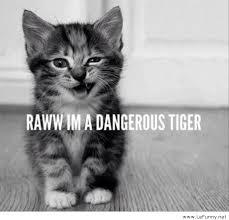 Funny Tiger Memes - dangerous tiger