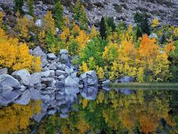 nature autumn color eastern sierra california picture nr 26163