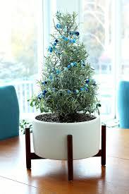 Pom Pom Trees Mini Pom Pom Garland For My Lavender Plant Dans Le Lakehouse