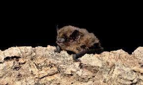 small bat smart detectors set to monitor bat