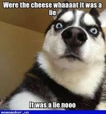 Crazy Wolf Meme - nice meme in http mememaker us olivia watson wolf meme creator