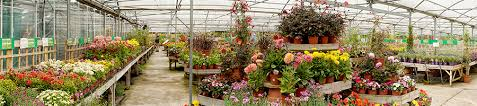 oaktree nursery and garden centre berkshire bracknell for plants