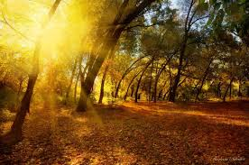 sun rays through the trees your essentials creations