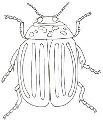 Coloriage Insecte A Imprimer Coloriage Insectes A Imprimer Gratuit
