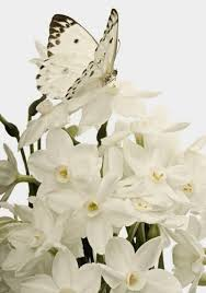 White Flowers Pictures - 79 best moon gardens images on pinterest moon garden white