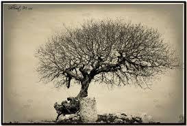 wide tree monochrome by shlomitmessica on deviantart