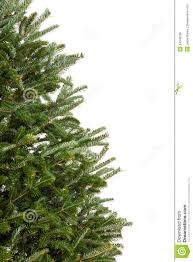 Decorated Christmas Tree Branches by Branches Of A Christmas Tree Royalty Free Stock Image Image