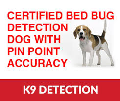 Can Bed Bugs Kill You Bed Bug Treatment Nyc Long Island Brooklyn Queens
