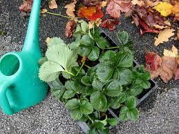 Garden Club Ideas Gardening Club
