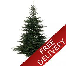 7ft christmas tree everlands grandis fir 7ft artificial christmas tree
