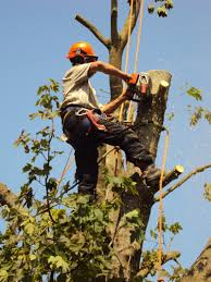 southern tree works fully qualified tree surgeons and hard