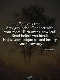 the 25 best quotes on trees ideas on tree quotes