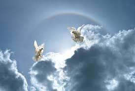royalty free peace dove pictures images and stock photos istock