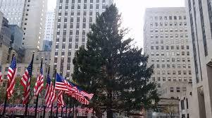 rockefeller center christmas tree arrives on the rockefeller plaza