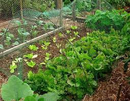 how to start a vegetable garden for beginners how to grow an organic vegetable garden all organic gardening