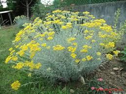 Summer Flower Garden Ideas - 29 best landscape and garden ideas images on pinterest flowers