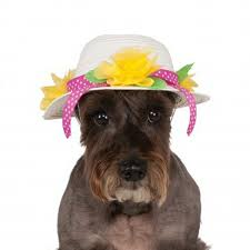 easter bonnet easter bonnet dog hat with same day shipping baxterboo