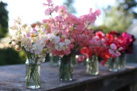 sweet peas flowers flower focus my favorite sweet peas floret flowers