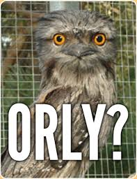 Meme Orly - orly tawny frogmouth o rly know your meme