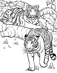 coloring page tigers two tigers ready for hunting coloring page download print online
