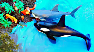 learning sea animal names blue ocean water colors beach sand toys