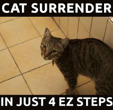 Morpheus Cat Meme - pin by wendy peters on cat beds pinterest cat