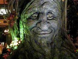 tree face tree face youtube