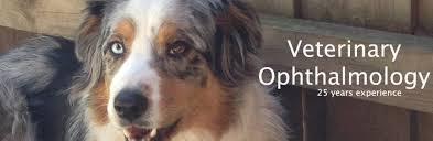 australian shepherd gif welcome to animal eye care