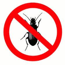 4 pest prevention tips for your portland oregon rental property