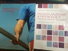 human anatomy and physiology custom edition for csula elaine n