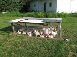 Backyard Chicken Tractor by Meat Chicken Tractor Question Backyard Chickens