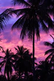 purple palm tree silhouette free stock photo public domain pictures