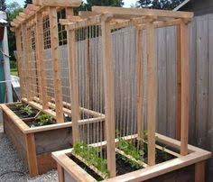 Vine Trellis Ideas Need To Do This This Year Gardening Ideas Pinterest Raised