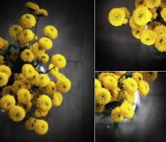 Yellow Pom Pom Flowers - yellow pompom flowers forget their name morningdew