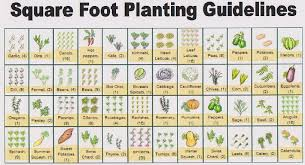 Square Foot Garden Layout Ideas Attractive Square Foot Vegetable Gardening Square Foot Vegetable