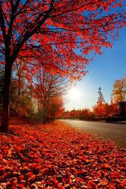 10 best fall paint colors images on pinterest fall paint colors