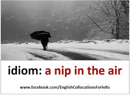 5859 best idioms and expressions images on