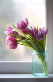 best 25 spring flowers images ideas only on pinterest spring