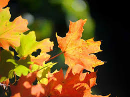 indiana dnr dry weather shorten fall foliage display